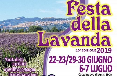 Lavender Festival 2019