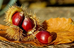 Wine and Chestnuts Festival<br>November 3rd/12th