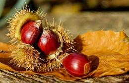Festa del Vino e delle Castagne<br>3/12 Novembre