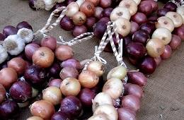 Cannara Onion