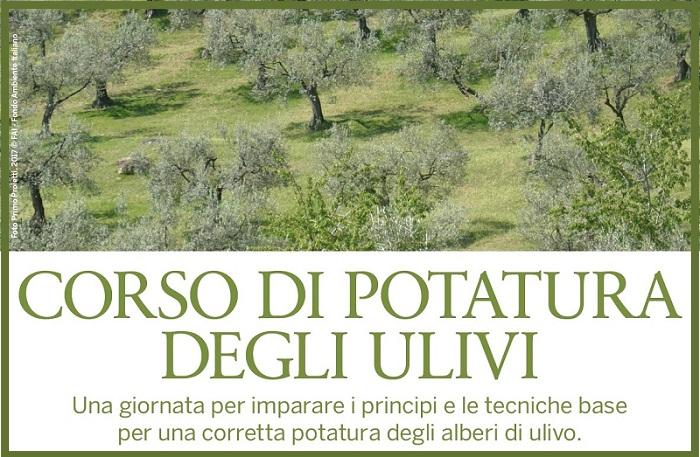Corso di potatura degli ulivi