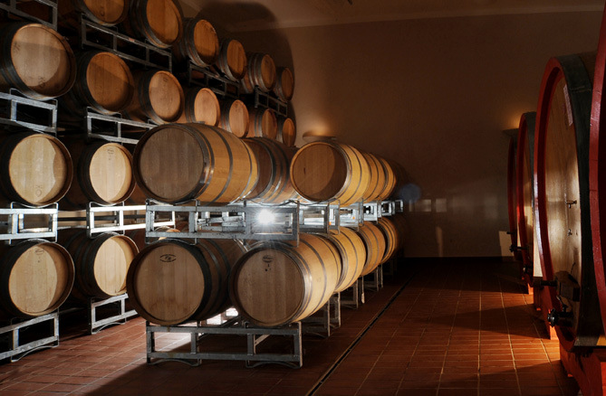 Visit and winetasting in winery in Todi