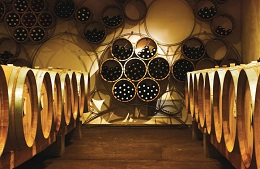Visit in Winery and Wine Tasting
