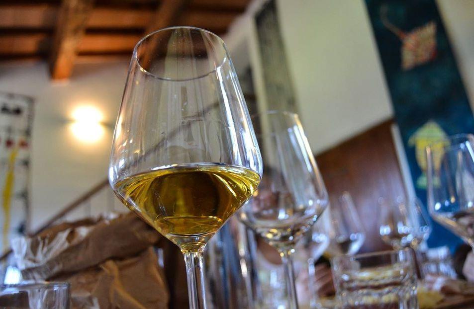 Winetasting in winery in Torgiano