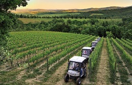Eco-tour in vineyard by electric jeep and wine tasting
