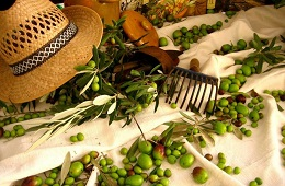 Guided visits and tasting in olive oil mill