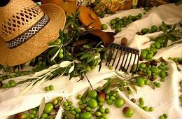 Visite guidate e degustazioni in Frantoio