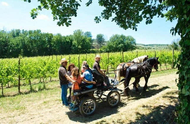 Horse and carriage wine tour