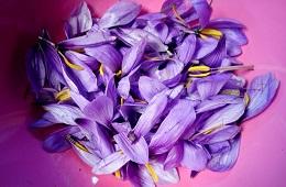 Cascia Saffron